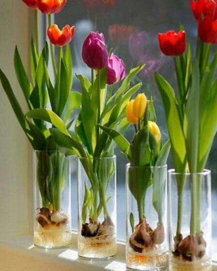 выращивание в вазах